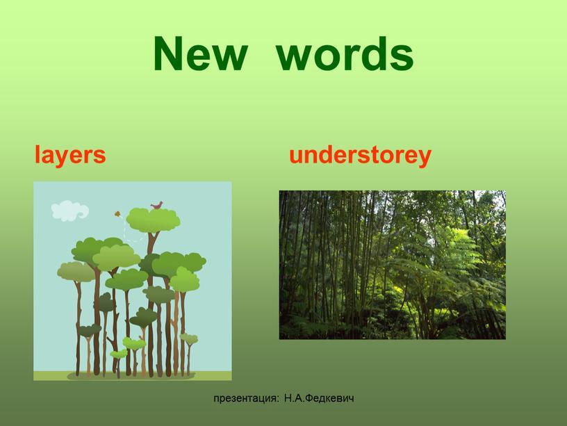 Н.А.Федкевич New words layers understorey