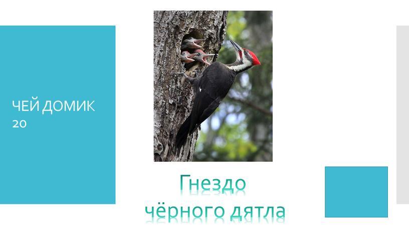 ЧЕЙ ДОМИК 20 Гнездо чёрного дятла