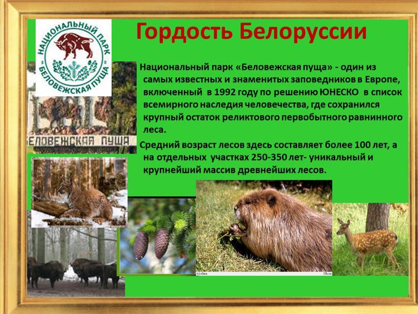 Гордость Белоруссии Национальный парк «Беловежская пуща» - один из самых известных и знаменитых заповедников в