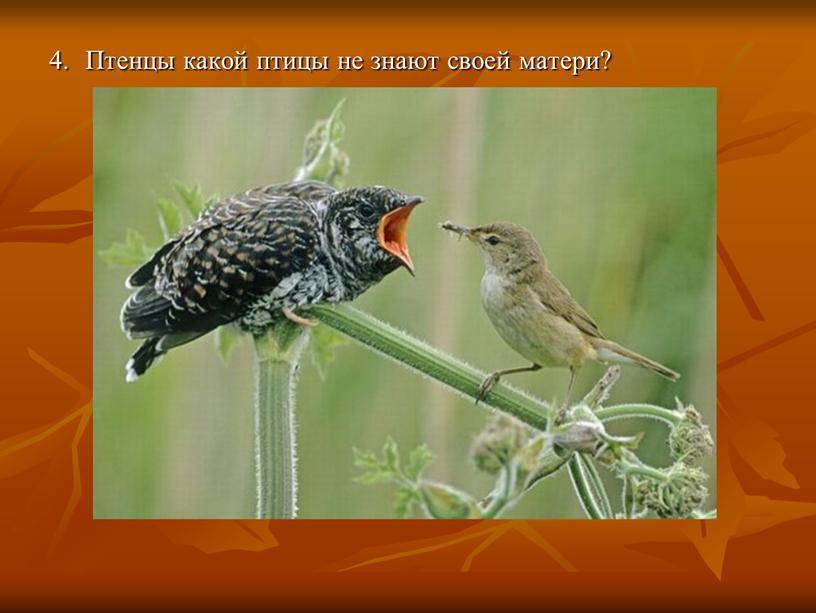 Птенцы какой птицы не знают своей матери?