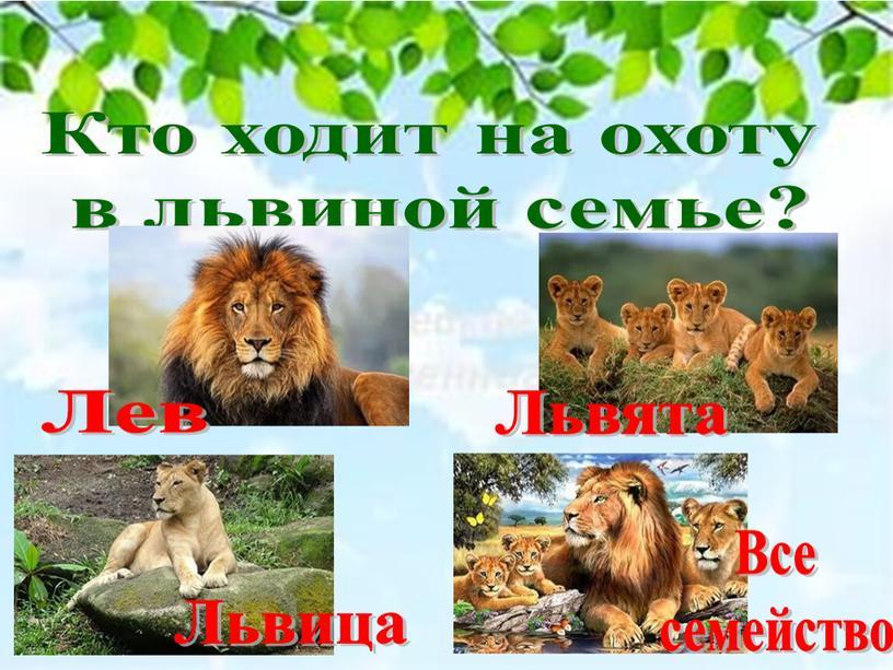 Кто ходит на охоту в львиной семье?