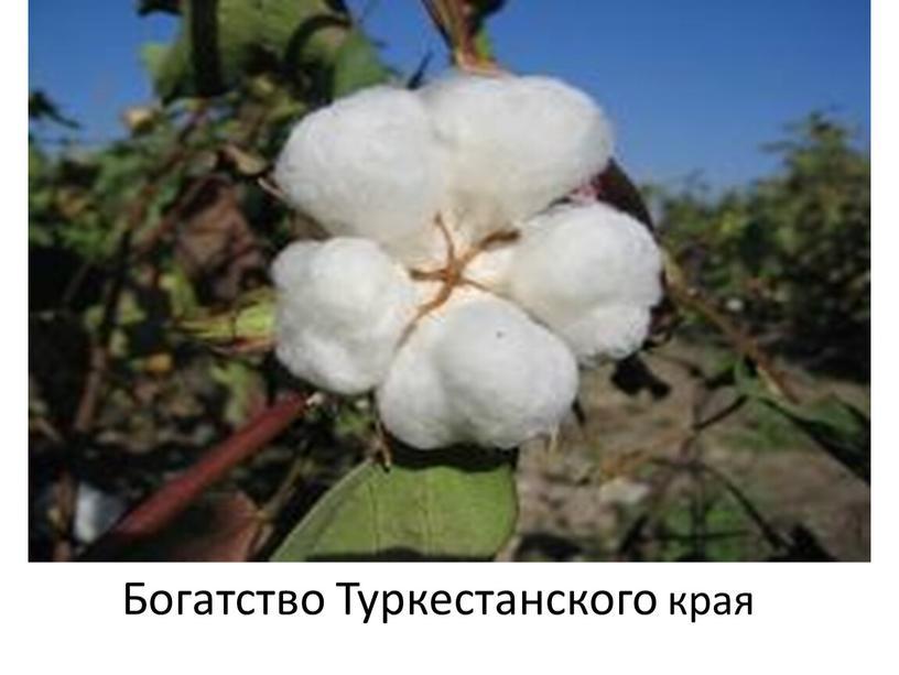 Богатство Туркестанского края