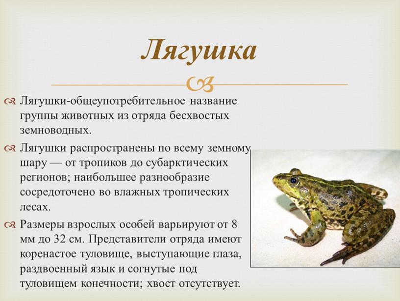 Лягушки-общеупотребительное название группы животных из отряда бесхвостых земноводных