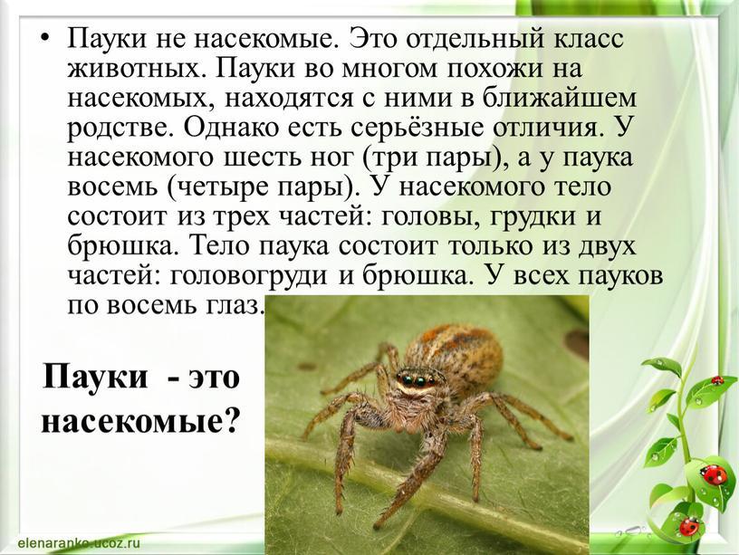 Пауки не насекомые. Это отдельный класс животных