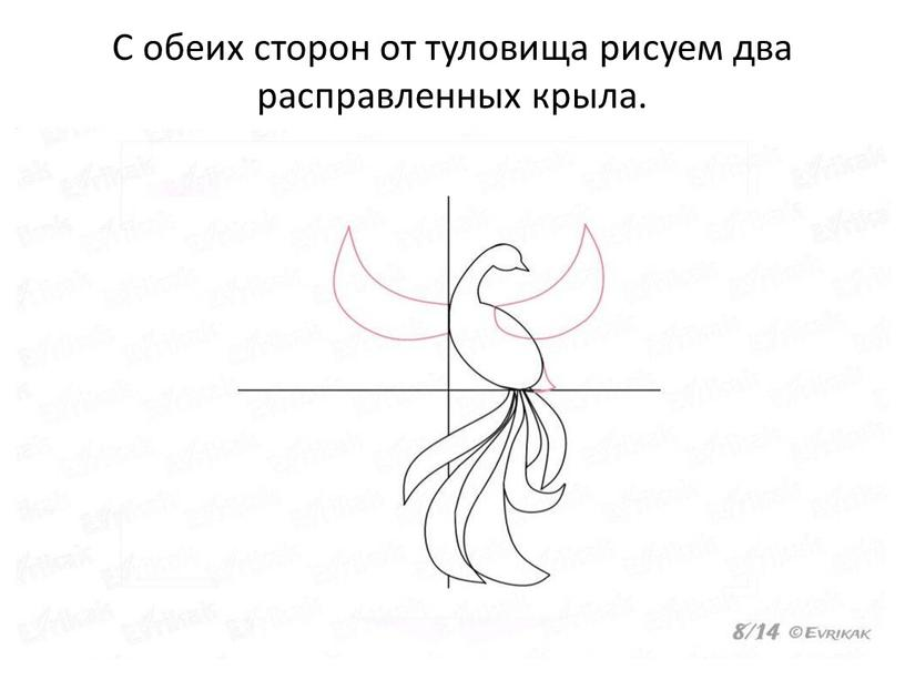 С обеих сторон от туловища рисуем два расправленных крыла