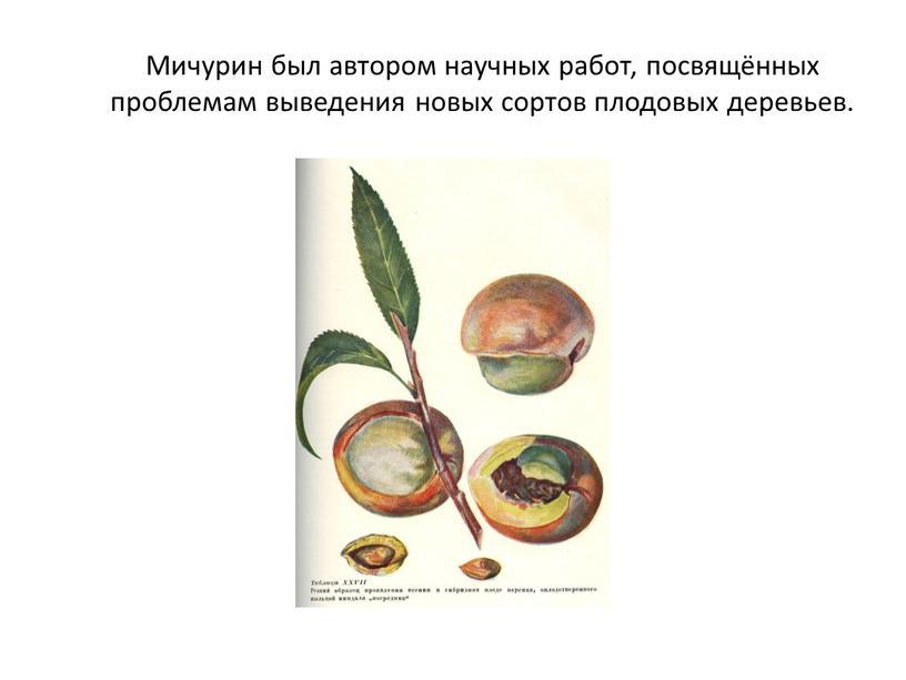 Мичурин был автором научных работ, посвящённых проблемам выведения новых сортов плодовых деревьев