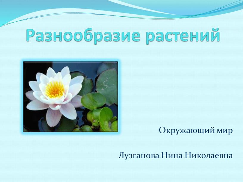Разнообразие растений Окружающий мир