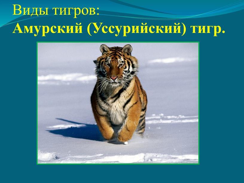 Виды тигров: