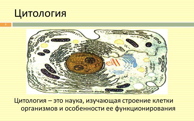 Цитология Цитология – это наука, изучающая строение клетки организмов и особенности ее функционирования 3