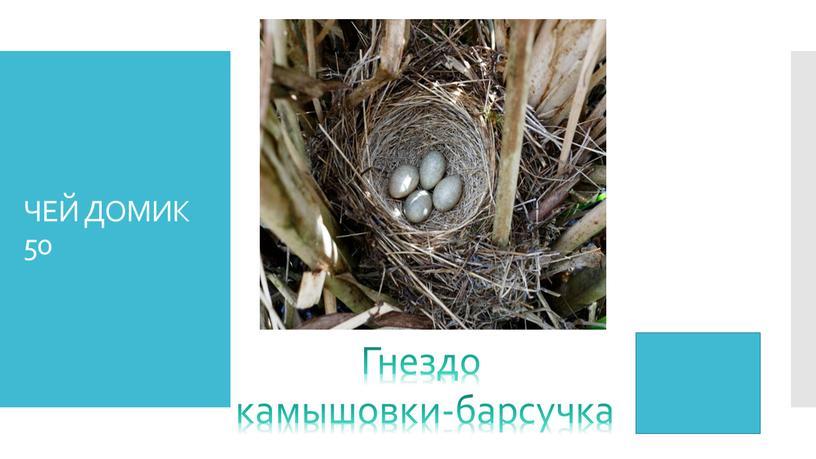ЧЕЙ ДОМИК 50 Гнездо камышовки-барсучка