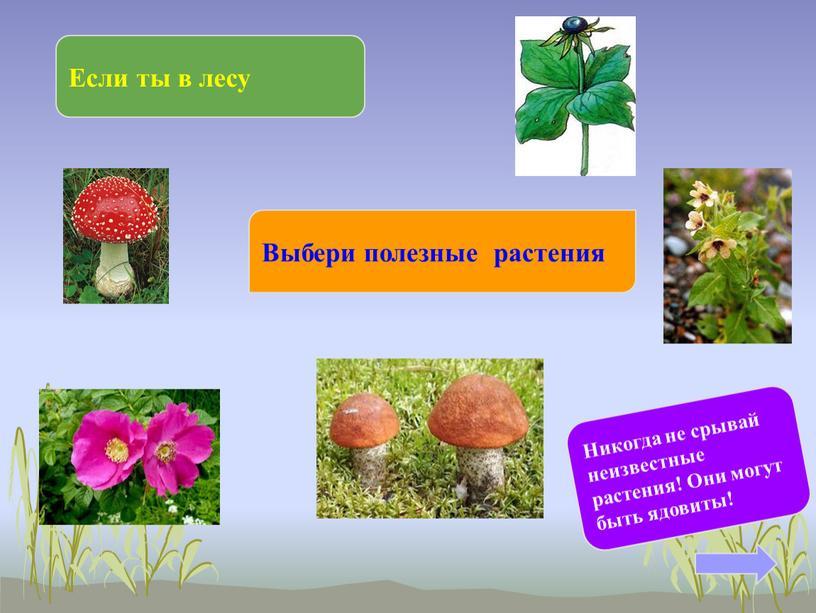 Если ты в лесу Выбери полезные растения