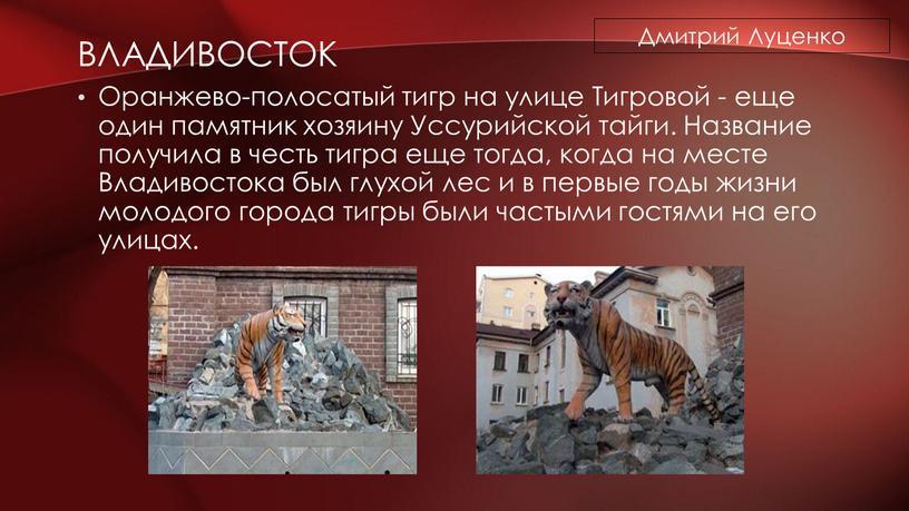 ВЛАДИВОСТОК Оранжево-полосатый тигр на улице