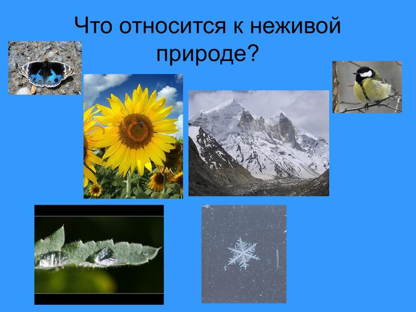 Что относится к неживой природе?