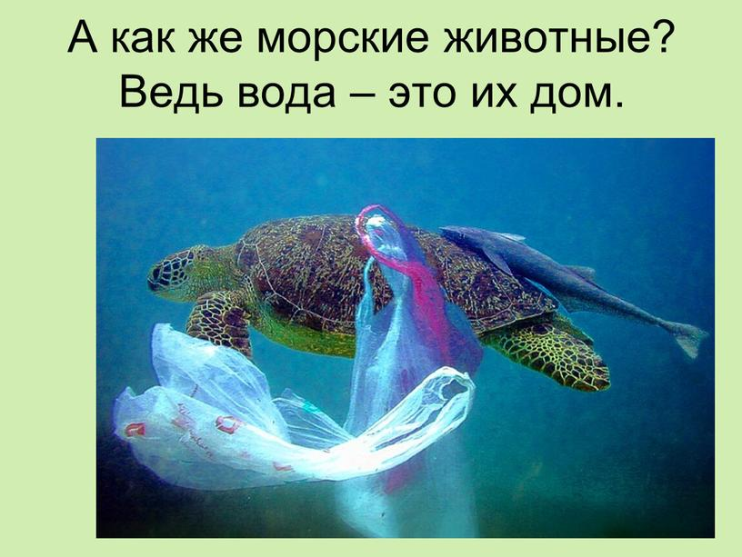 А как же морские животные? Ведь вода – это их дом