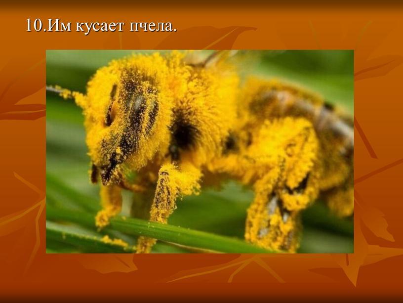 10.Им кусает пчела.