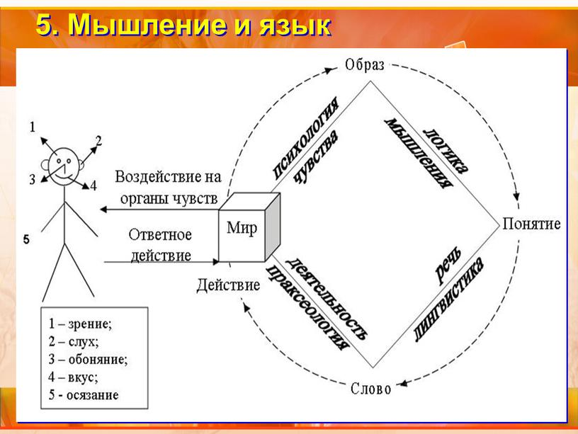 5. Мышление и язык