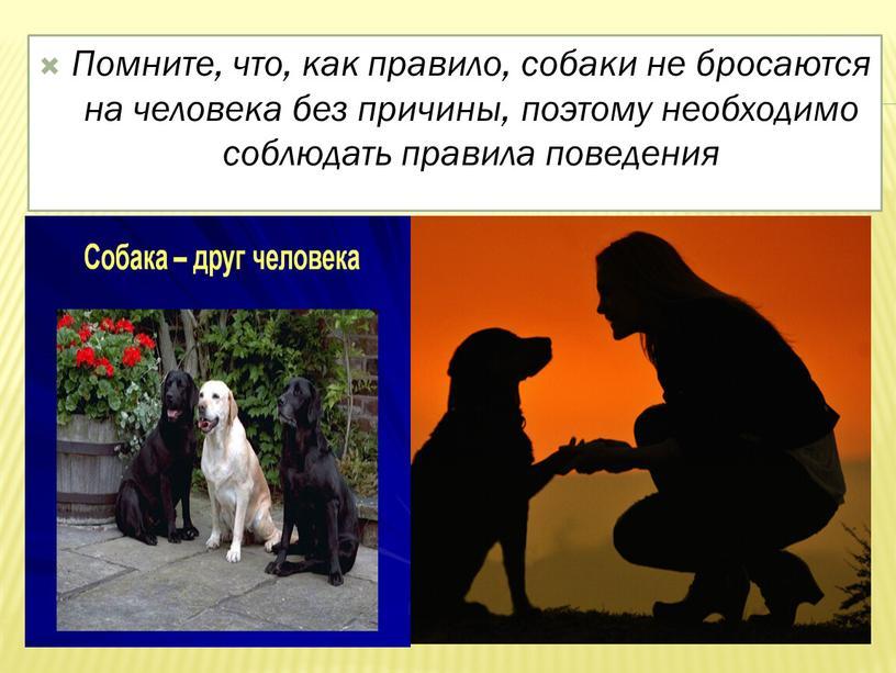 Помните, что, как правило, собаки не бросаются на человека без причины, поэтому необходимо соблюдать правила поведения