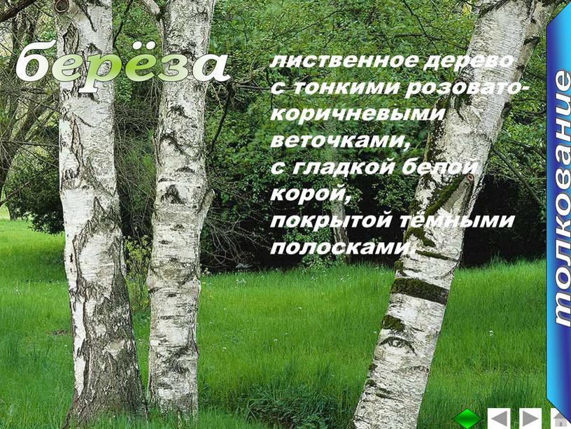 лиственное дерево с тонкими розовато- коричневыми веточками, с гладкой белой корой, покрытой тёмными полосками. берёза толкование