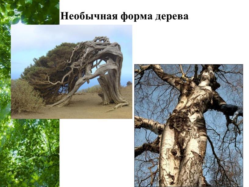 Необычная форма дерева