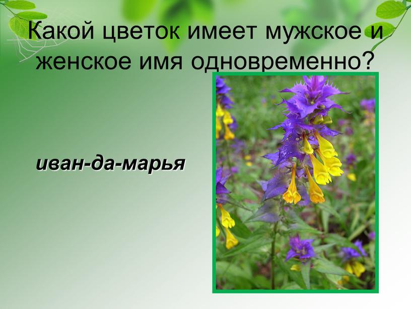 Какой цветок имеет мужское и женское имя одновременно? иван-да-марья