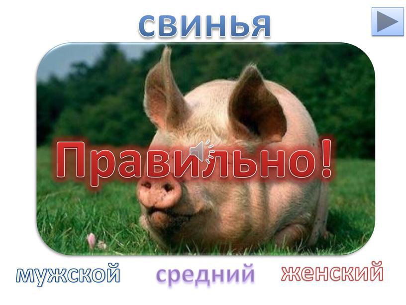 Правильно! свинья мужской средний женский