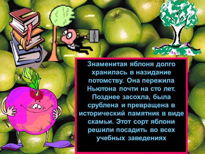 Знаменитая яблоня долго хранилась в назидание потомству
