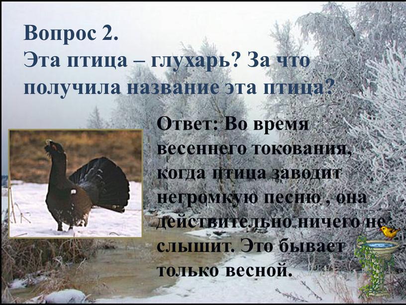 Вопрос 2. Эта птица – глухарь?