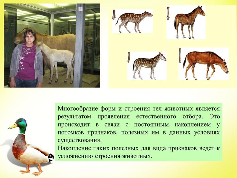 Многообразие форм и строения тел животных является результатом проявления естественного отбора