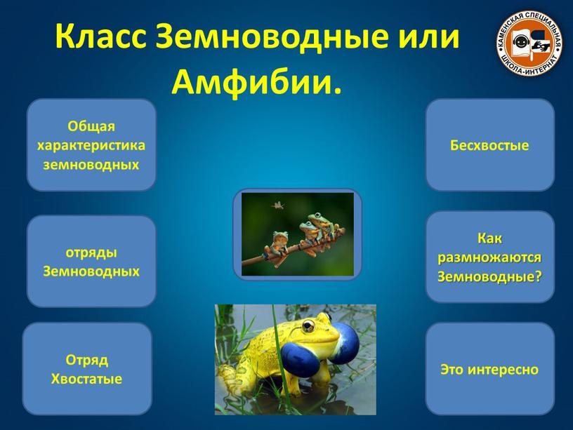 Класс Земноводные или Амфибии.