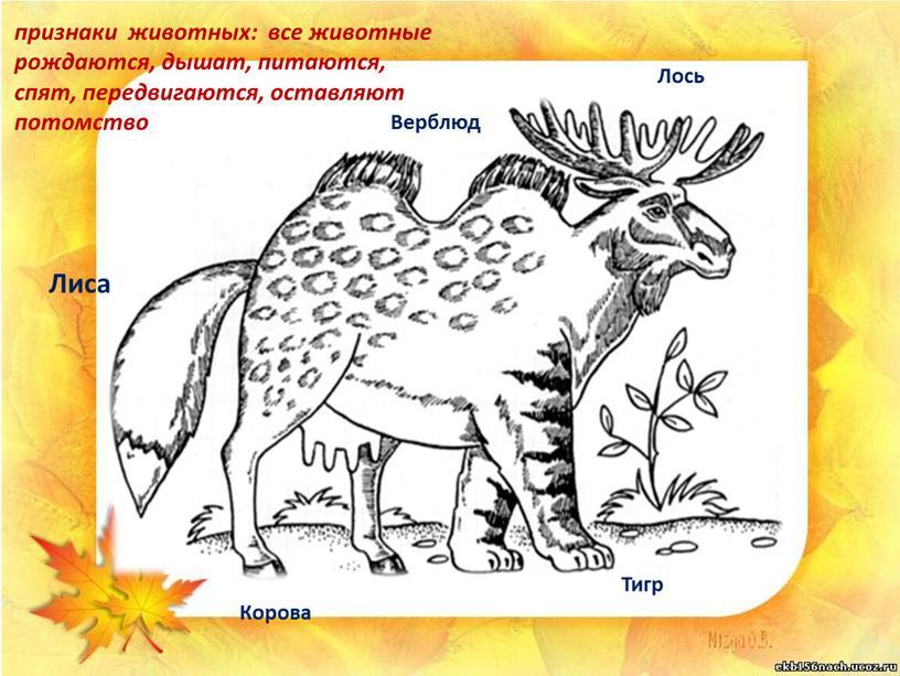 Лиса Корова Верблюд Лось Тигр признаки животных: все животные рождаются, дышат, питаются, спят, передвигаются, оставляют потомство
