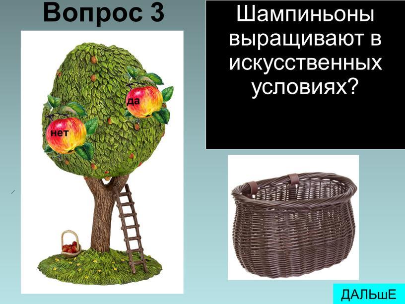 Вопрос 3 ДАЛЬшЕ Шампиньоны выращивают в искусственных условиях?