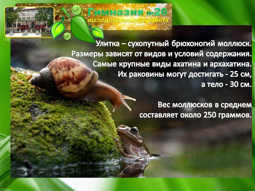 Улитка – сухопутный брюхоногий моллюск