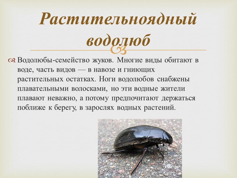 Водолюбы-семейство жуков. Многие виды обитают в воде, часть видов — в навозе и гниющих растительных остатках