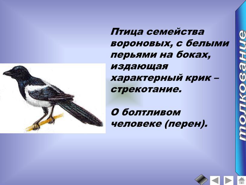 Птица семейства вороновых, с белыми перьями на боках, издающая характерный крик – стрекотание