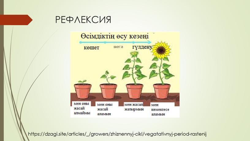 РЕФЛЕКСИЯ https://dzagi.site/articles/_/growers/zhiznennyj-cikl/vegatativnyj-period-rastenij