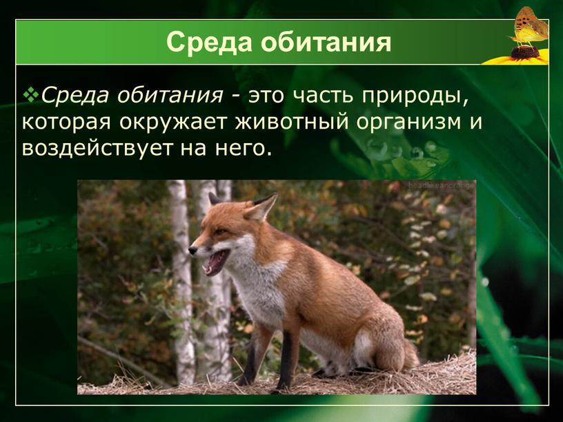 Среда обитания Среда обитания - это часть природы, которая окружает животный организм и воздействует на него