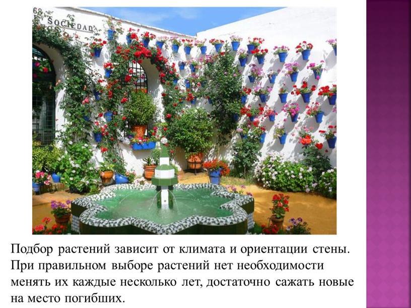 Подбор растений зависит от климата и ориентации стены
