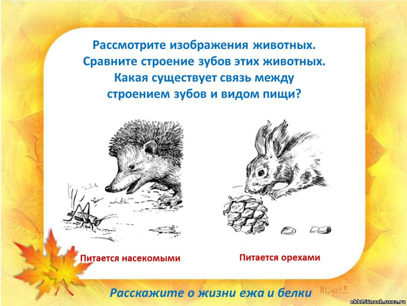 Рассмотрите изображения животных