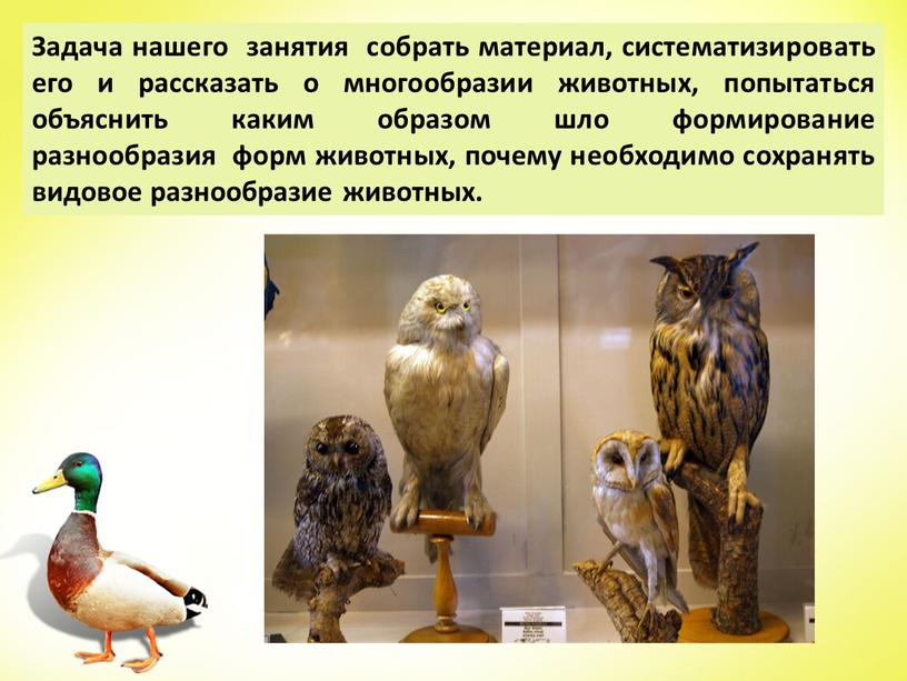 Задача нашего занятия собрать материал, систематизировать его и рассказать о многообразии животных, попытаться объяснить каким образом шло формирование разнообразия форм животных, почему необходимо сохранять видовое…