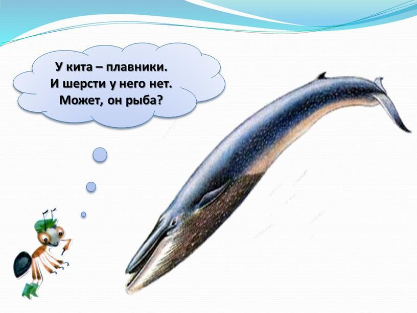 У кита – плавники.
