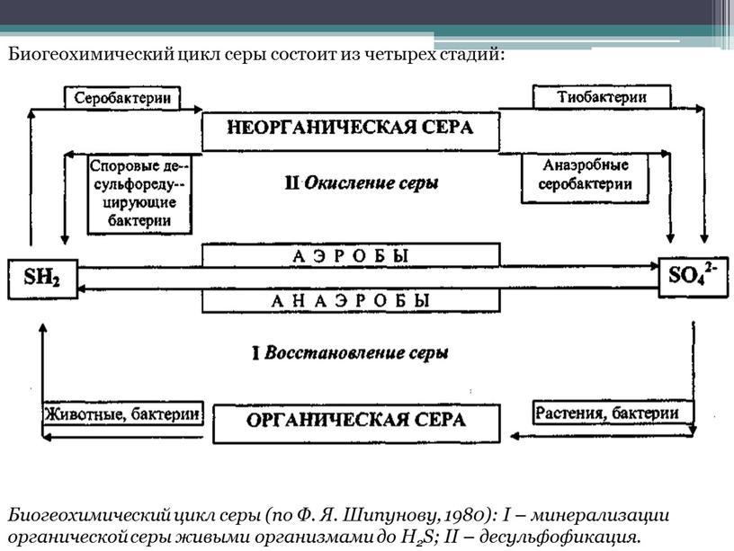 Биогеохимический цикл серы (по