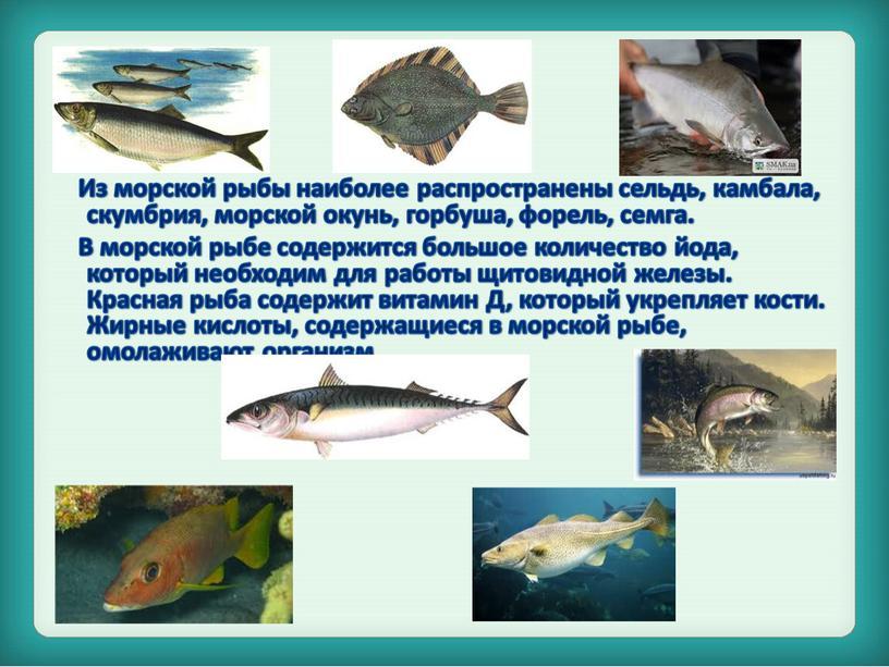 Из морской рыбы наиболее распространены сельдь, камбала, скумбрия, морской окунь, горбуша, форель, семга