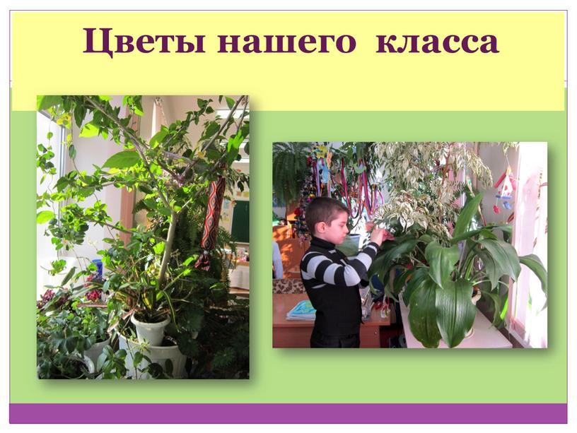 Цветы нашего класса
