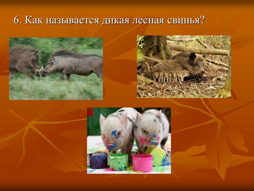 Как называется дикая лесная свинья?