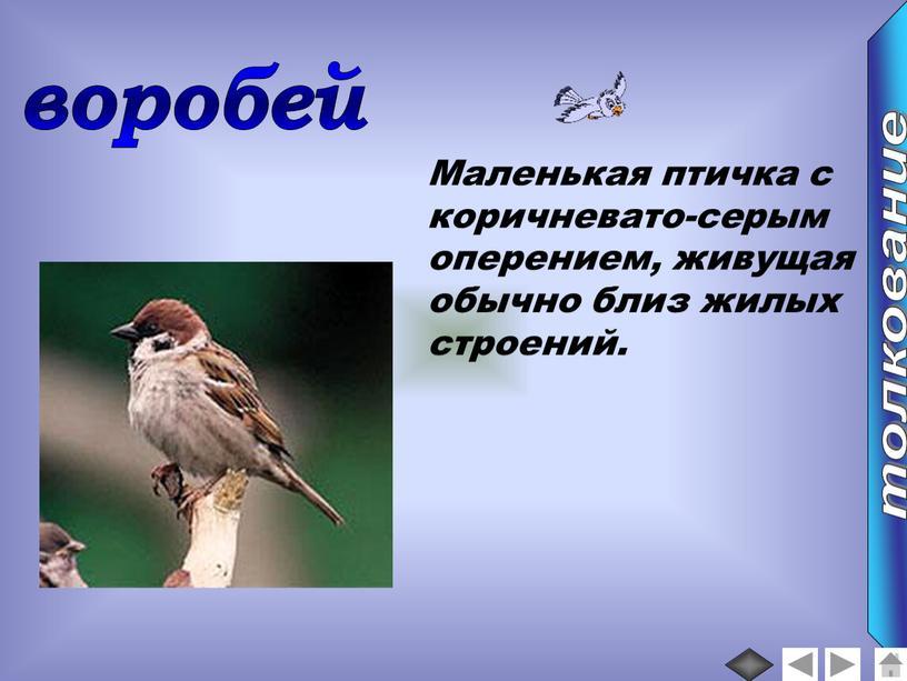 Маленькая птичка с коричневато-серым оперением, живущая обычно близ жилых строений