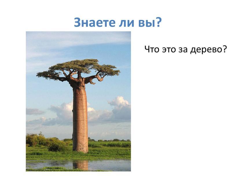 Знаете ли вы? Что это за дерево?