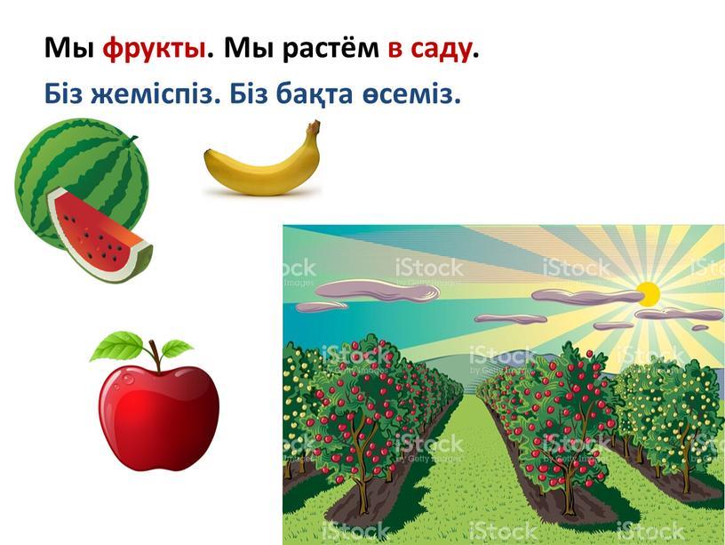 Мы фрукты. Мы растём в саду. Біз жеміспіз