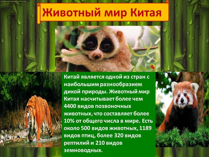 Животный мир Китая Китай является одной из стран с наибольшим разнообразием дикой природы