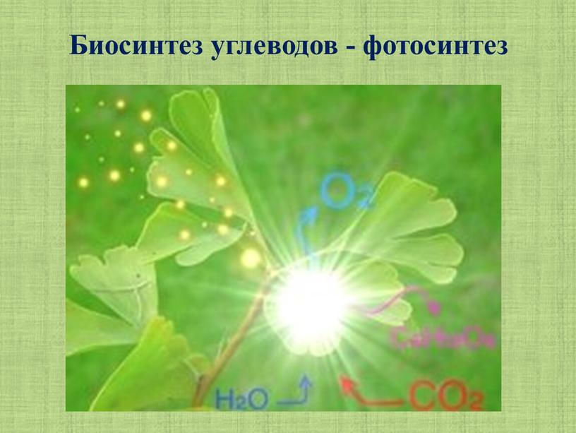 Биосинтез углеводов - фотосинтез