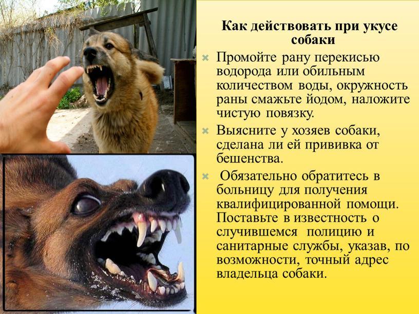 Как действовать при укусе собаки